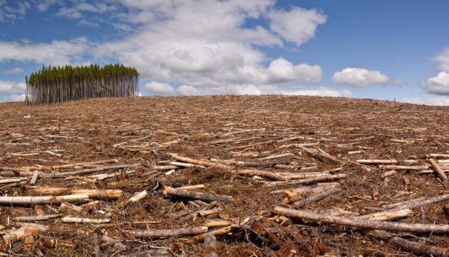 В Кузбассе сплошняком вырубили 40 гектаров леса