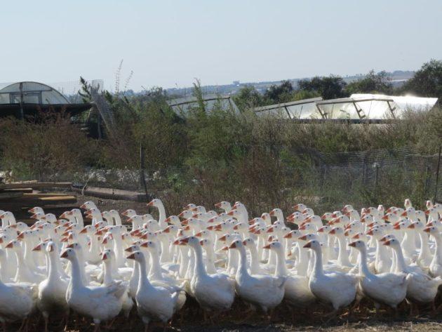 В Кузбассе создан Центр поддержки фермеров-предпринимателей