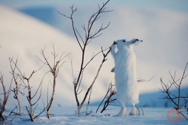 В Кузбассе обнаружили всплеск браконьерства