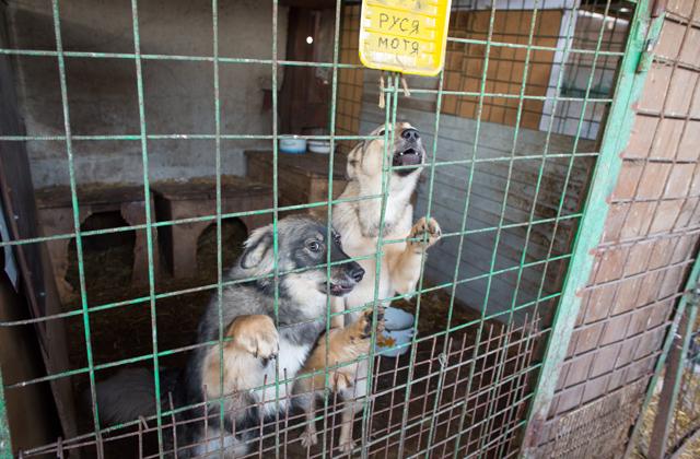 В Белове выбрали подрядчика на отлов бездомных животных