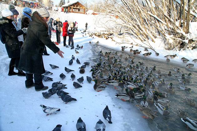 В Кемерове «искитимских» уток обеспечили едой на зиму