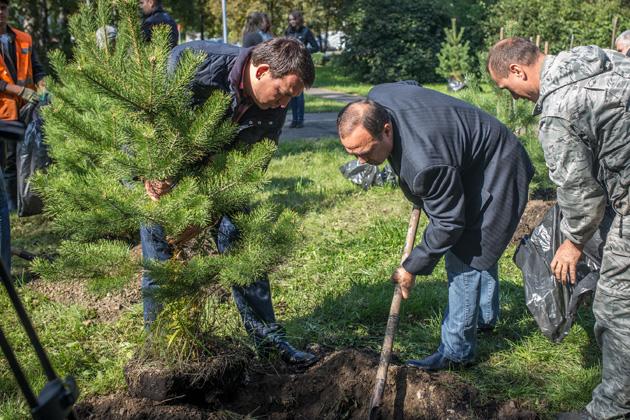 В Кузбассе в 2020 году планируют высадить 6,5 миллионов деревьев