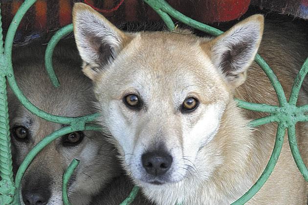 В Кемерове выбрали нового подрядчика на отлов бездомных животных