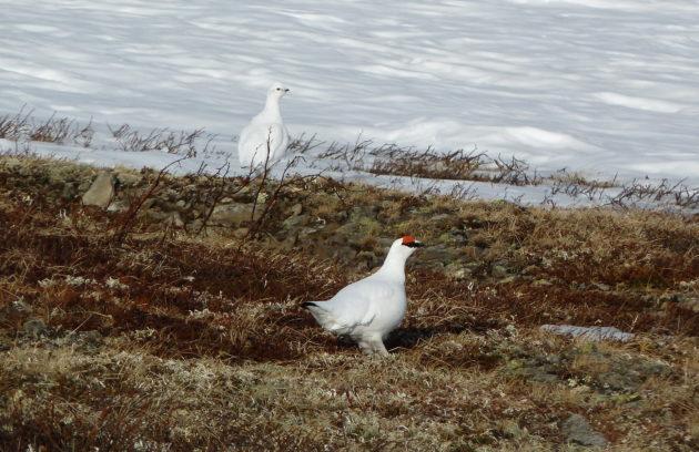 День орнитолога отметили в Кемеровской области