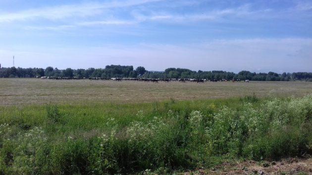 Кузбасс в 2019-м нарастил сельскохозяйственный экспорт до 314,9 млн долларов