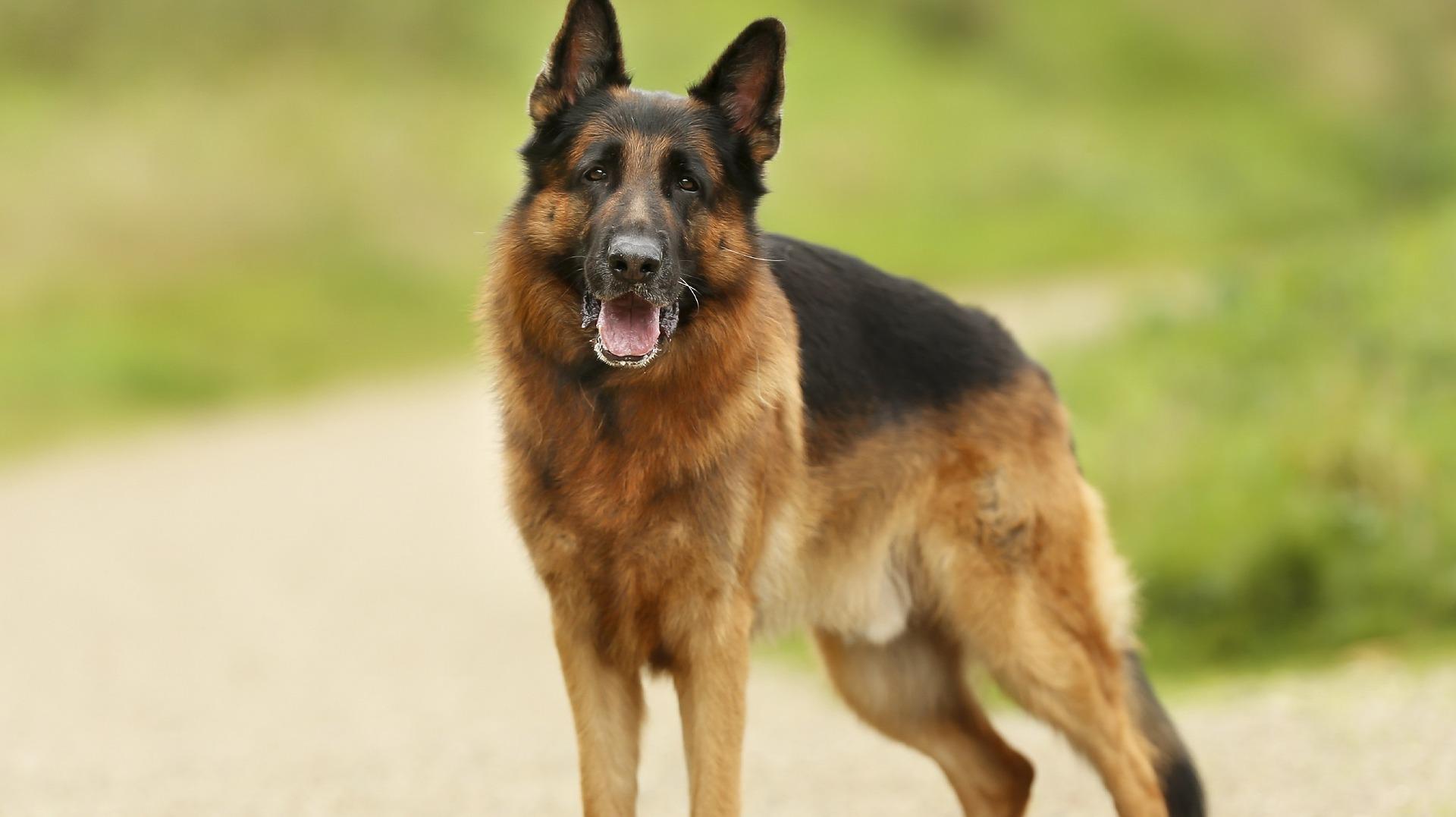 В Кемерове собака заперлась в квартире от хозяйки