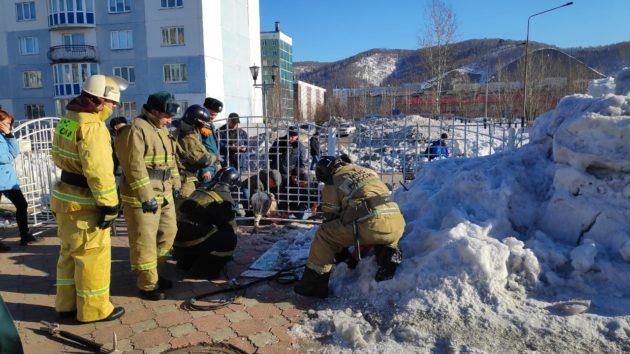 В Междуреченске косуля перепрыгнула через забор детского сада