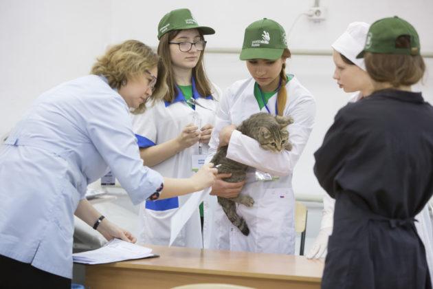 Финал WorldSkills Russia, запланированный в Новокузнецке, пройдет в формате онлайн