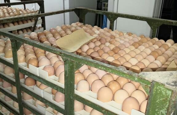 В Кузбассе увеличилось производство яиц