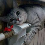 Отопление в Новокузнецке отключат по решению горожан
