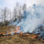 За один день в Кузбассе возникли 15 лесных пожаров