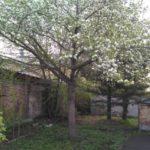 Деревья и кустарники в Кузбассе зацвели на три недели раньше срока