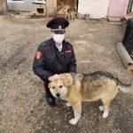В Юрге росгвардейцы передали 50 кг продуктов для бездомных животных