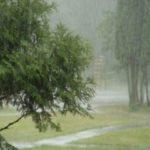 Тепло и влажно: синоптики прогнозируют дождливый понедельник в Кузбассе