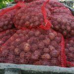 Семьи из Калтанского городского округа получили семенной картофель