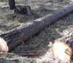 В заказнике Гурьевского района незаконно вырубили деревья