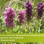 В Кузбассе появилась новая особо охраняемая природная территория