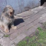 В Прокопьевске свирепая собака чуть не загрызла женщину-почтальона