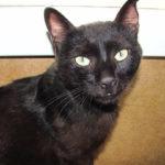 Новокузнечанин жестоко расправился с котом, нагадившим в постель