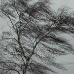 В понедельник в Кузбассе ожидается крепкий ветер и грозы