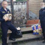 В Анжеро-Судженске росгвардейцы навестили в приюте спасённых щенков