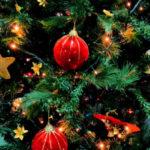 Как правильно выбрать новогоднюю елку
