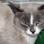 В Киселёвске возбуждено уголовное дело по факту жестокого обращения с животными