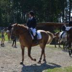 В Новокузнецком районе прошёл Кубок главы по конному спорту