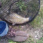В Берёзовском рыбак вернулся домой с необычным уловом