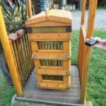 Минсельхоз прокомментировал ситуацию по поводу массовой гибели пчёл в Кузбассе