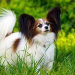 Как подобрать породу собаки: рекомендации экспертов