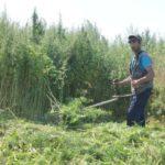 В Юрге полицейские изъяли у местного жителя «зелёные наркотики»