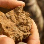 Яйцо эпохи динозавров нашли в Кузбассе