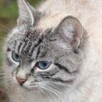 Новокузнечанин наказан за жестокое обращение с животными