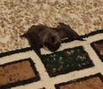 Неопытные летучие мыши залетают в квартиры кузбассовцев