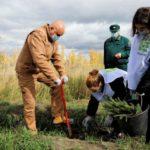 250 тысяч деревьев за один день посадили в Кузбассе