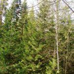 Власти Кемеровской области потратят 12 миллионов на лес