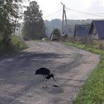 В жилом районе Кемерова сфотографировали редкую птицу.