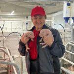 В Новокузнецком районе две свиноматки принесли рекордное количество поросят