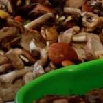 Время грибов: в Кузбассе грибник принес домой 190 кг белых, подберезовиков и маслят