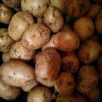 Перезимуем: Кузбасс начал раздавать бесплатно овощи льготникам и семьям, пострадавшим от пандемии