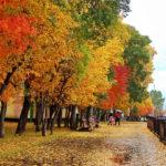На выходных кузбассовцев ждет роскошная погода