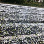 Шквал, снег и потепление: Кузбасс ожидает погодный беспредел