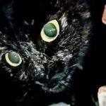 В Таштаголе крупно повезло чёрной кошке