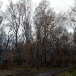 Кузбасс прощается с затянувшейся осенью