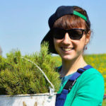 Более 8,5 миллионов деревьев планируют высадить в Кузбассе в 2021 году