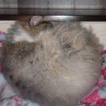 Жительница Кузбасса заподозрила, что у её кошки ковид