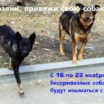 В Яйском округе отловят бродячих собак