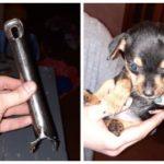 Новокузнецкие спасатели вызволили щенка из кастрюли