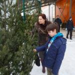 В мэрии Новокузнецка рассказали, где можно купить новогоднюю елку